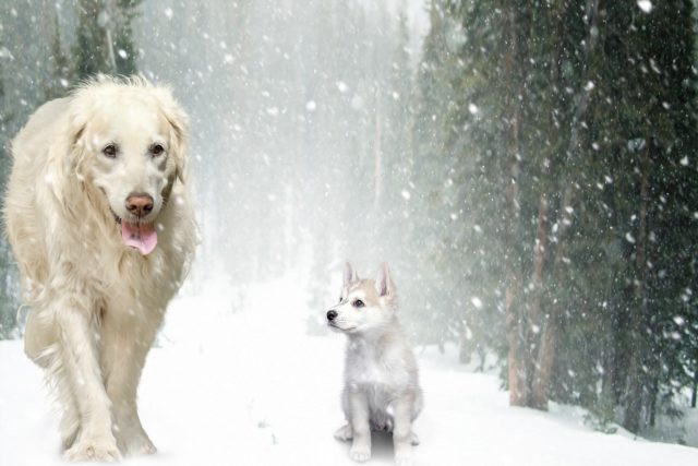 This Dog Rescued His Tiny Puppy Friend Trapped In The Snow